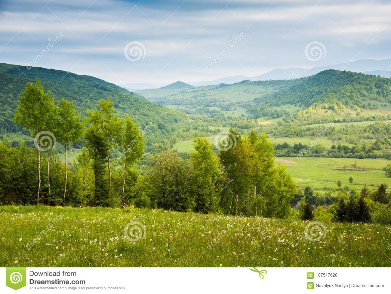 Field Of White Flowers Spring In Mountains Stock Photo Image Of