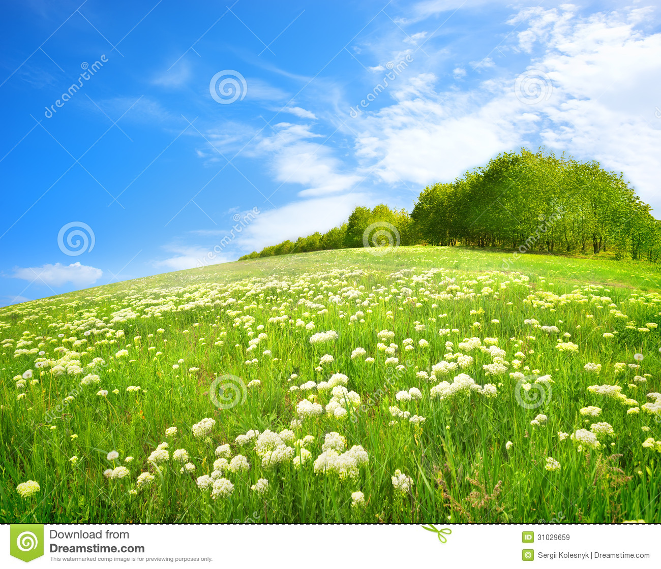Field Of White Flowers Related Keywords & Suggestions -Field Of White ...