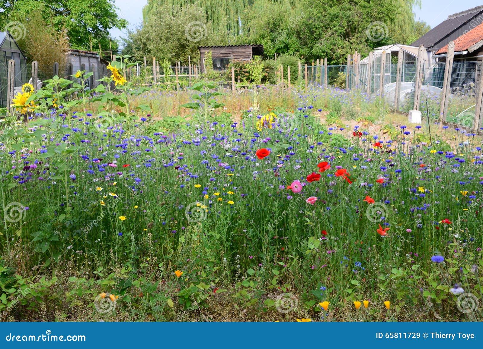 Field of wild flowers with lots of colors in garden in belgium