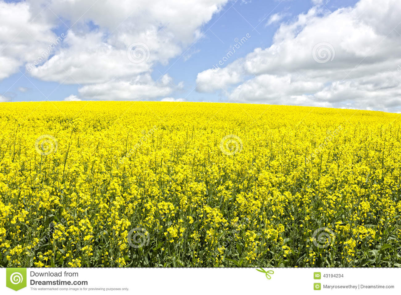 Crop with yellow flowers images fresh lotus flowers crop with yellow flowers images flower decoration ideas mightylinksfo