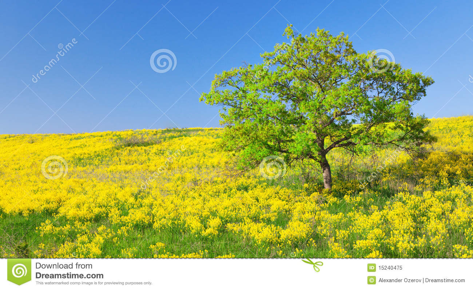 Field of yellow flowers and green tree stock image image of nobody field of yellow flowers and green tree mightylinksfo