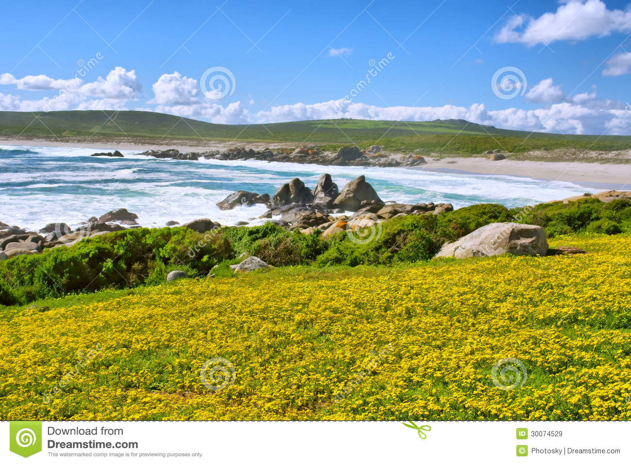 Field Of Yellow Flowers Next To Sea Beach Royalty Free
