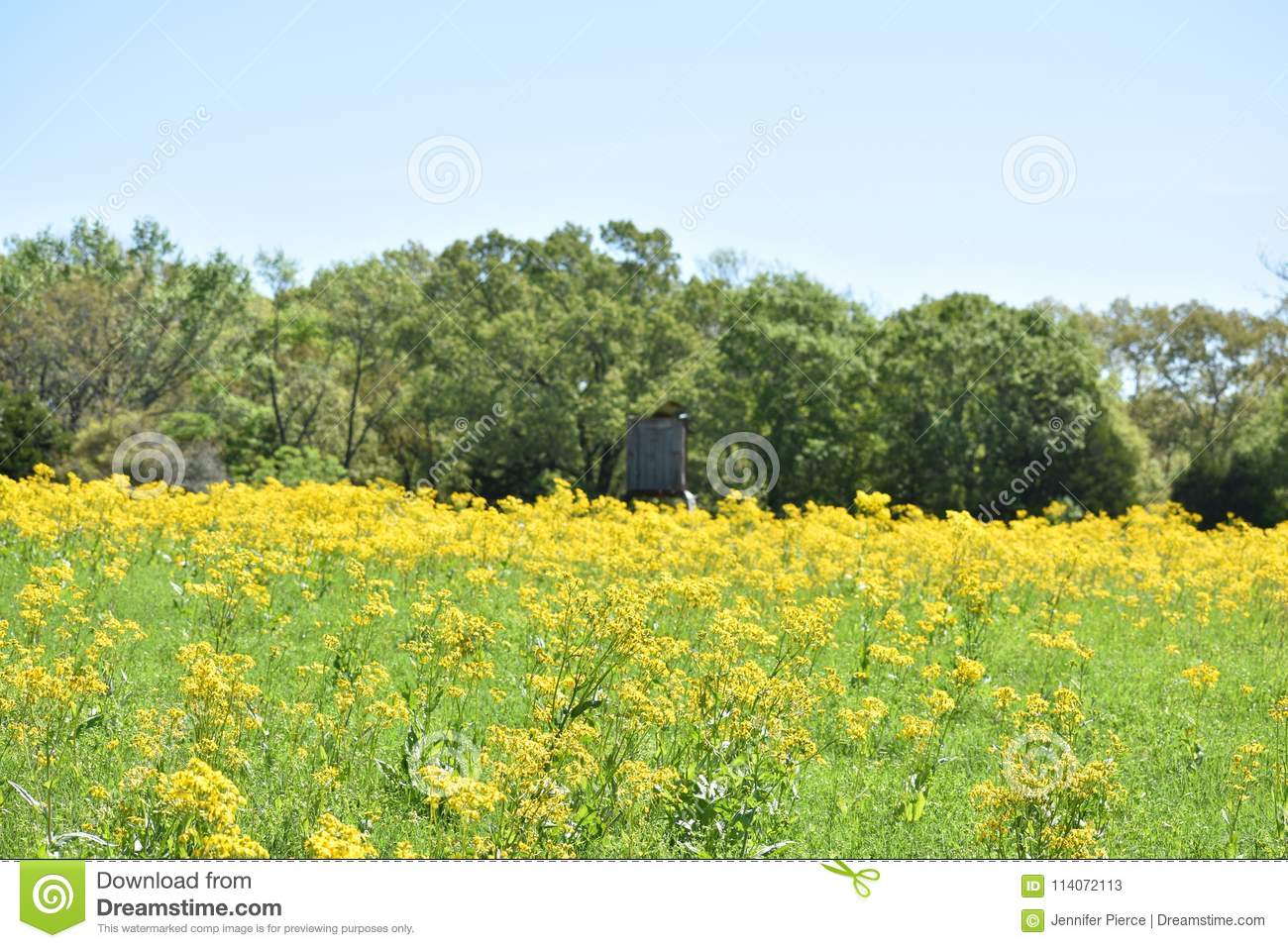 Rustic Deer Stand In A Field Of Yellow Flowers Stock Image Image