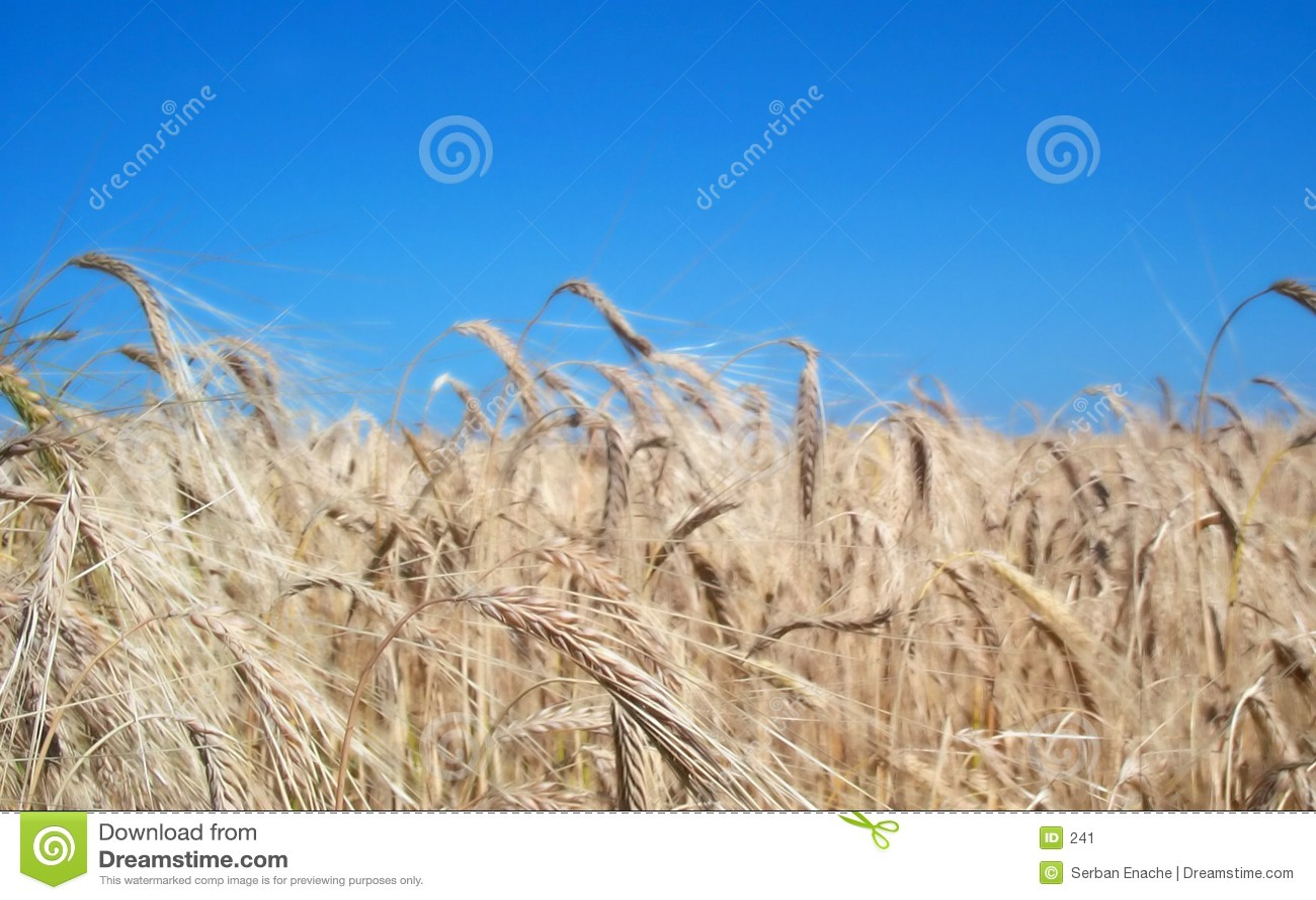 Fields золотистое