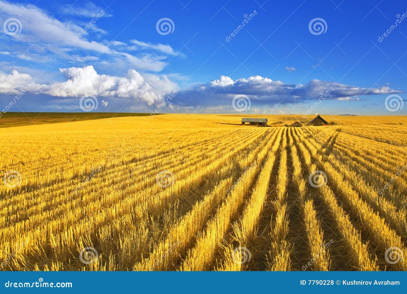 Fields полдень Монтана