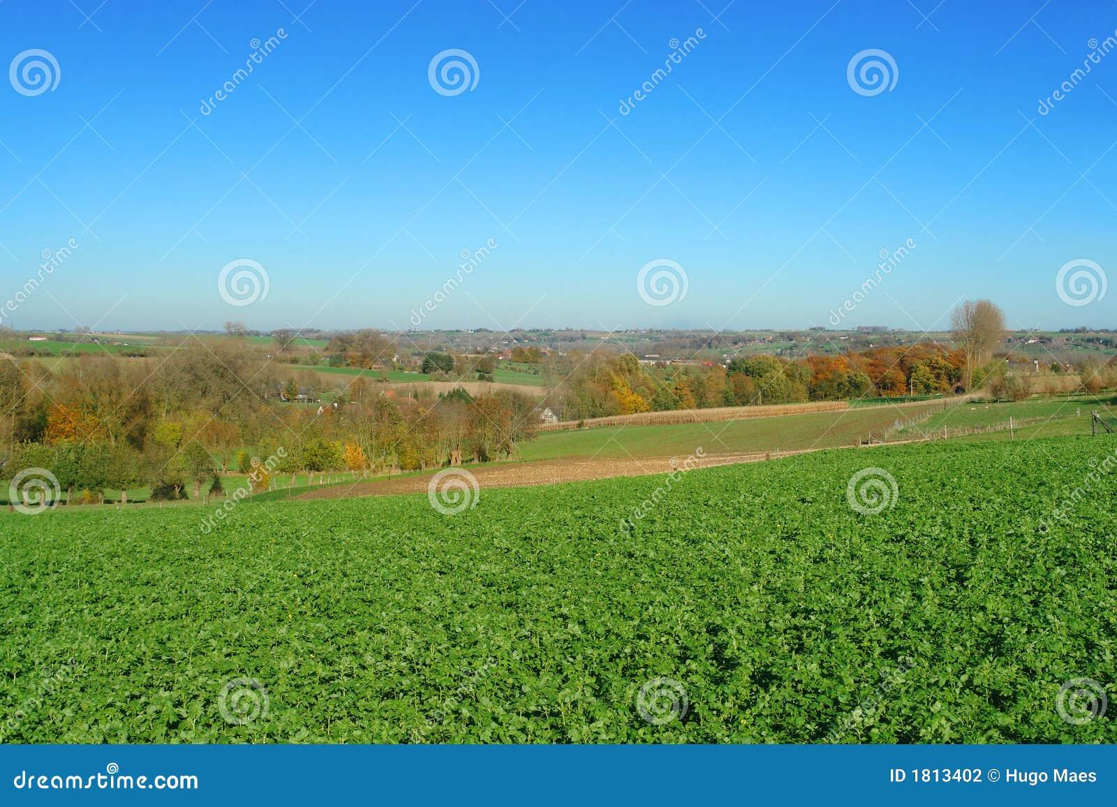 Fields Фландрия