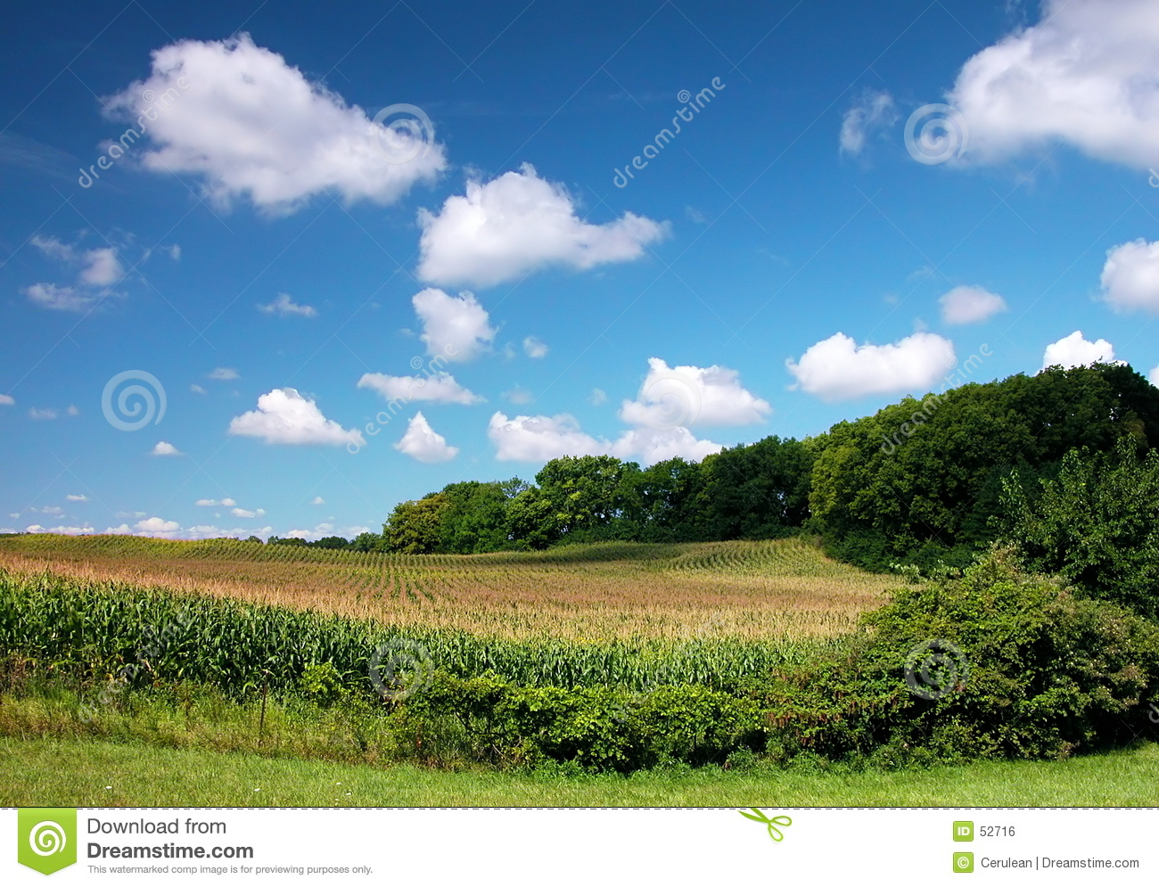 Fields with Clouds