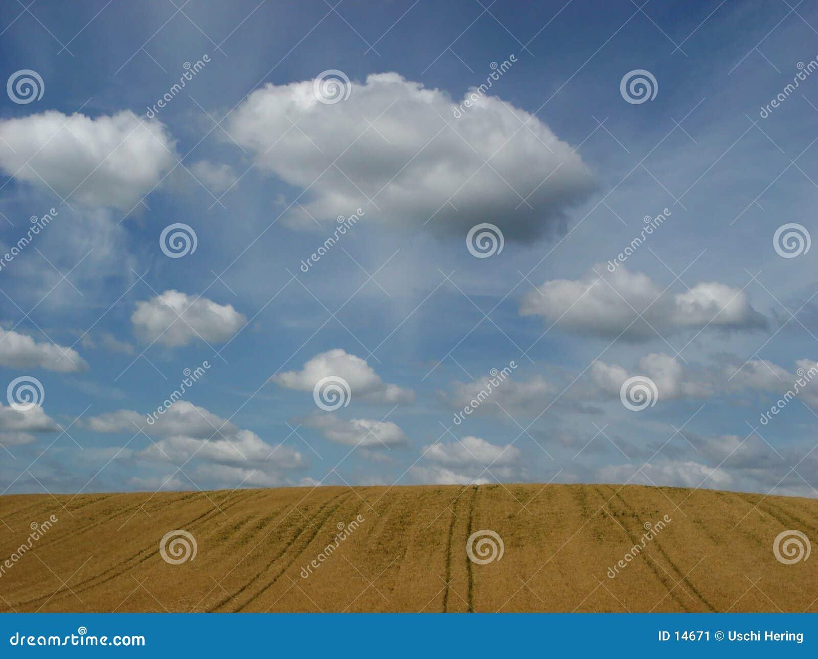 Fields guld-