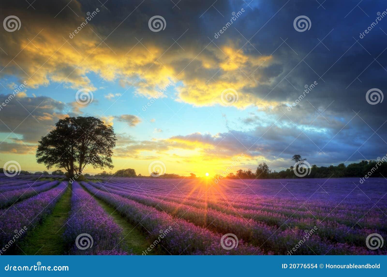 Fields lavendel över bedöva solnedgång