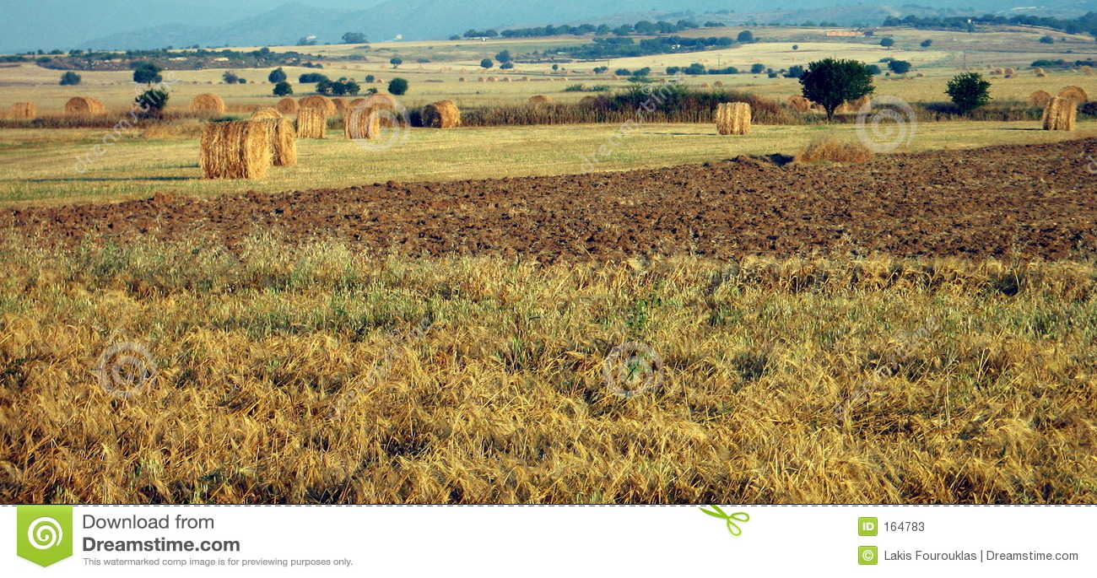 Fields panorama