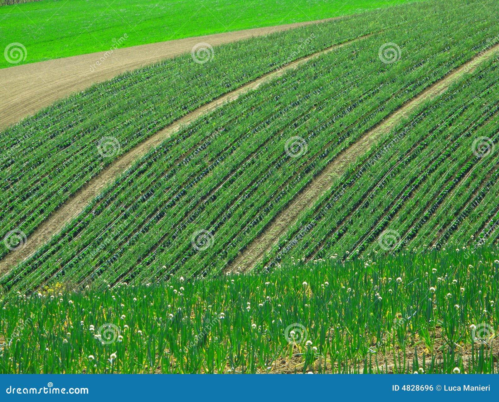 Fields springtime