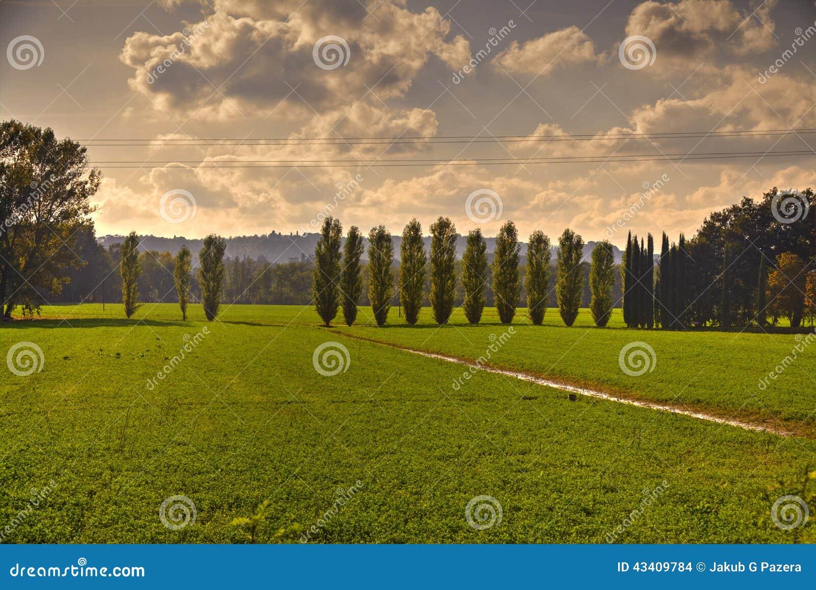 Fields tuscan