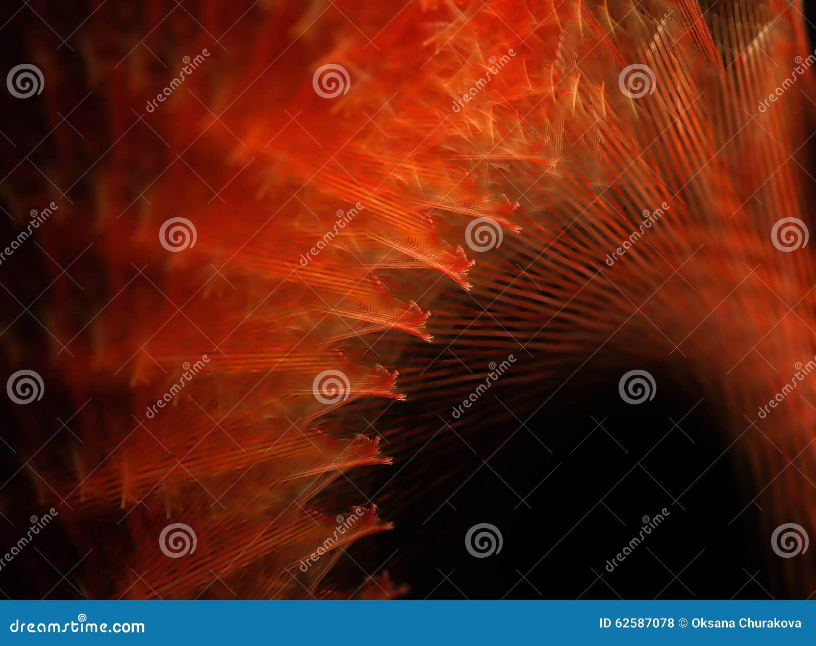 Fiery fractal spiral