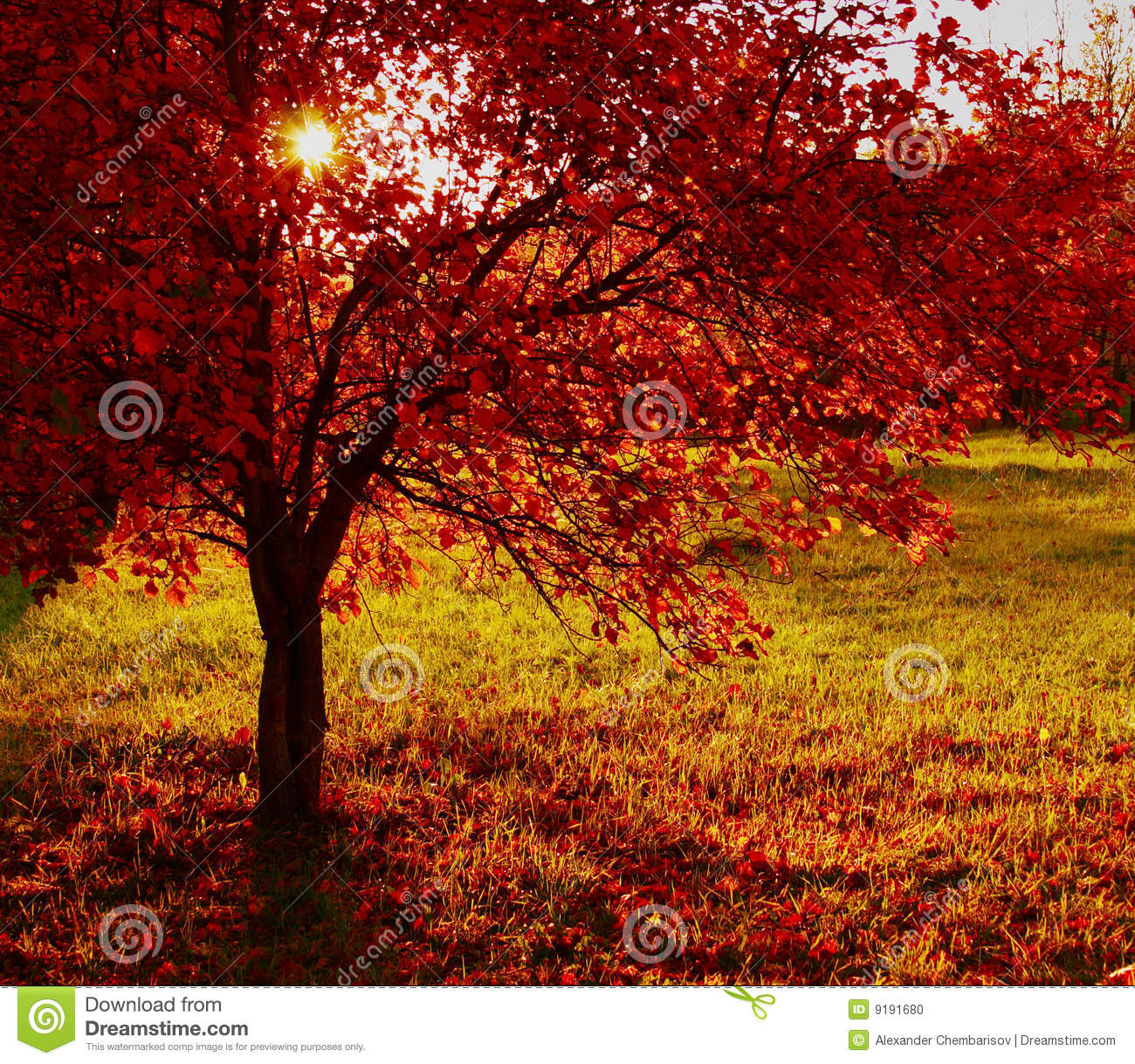 Download Fiery red bush stock photo. Image of color, nobody, horizontal - 9191680
