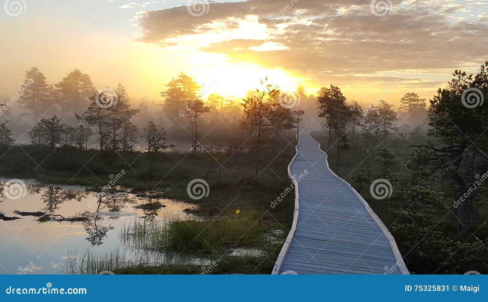 Fiery sunrise in the bog