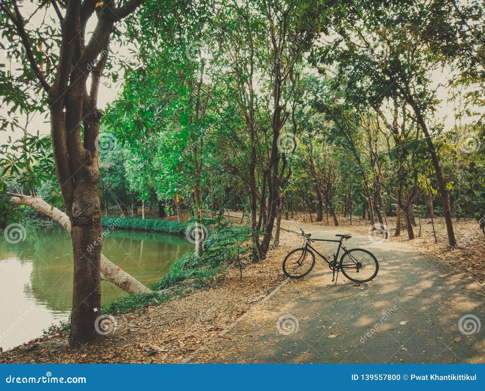01 - Fiets het cirkelen op een moerassige weg in een park