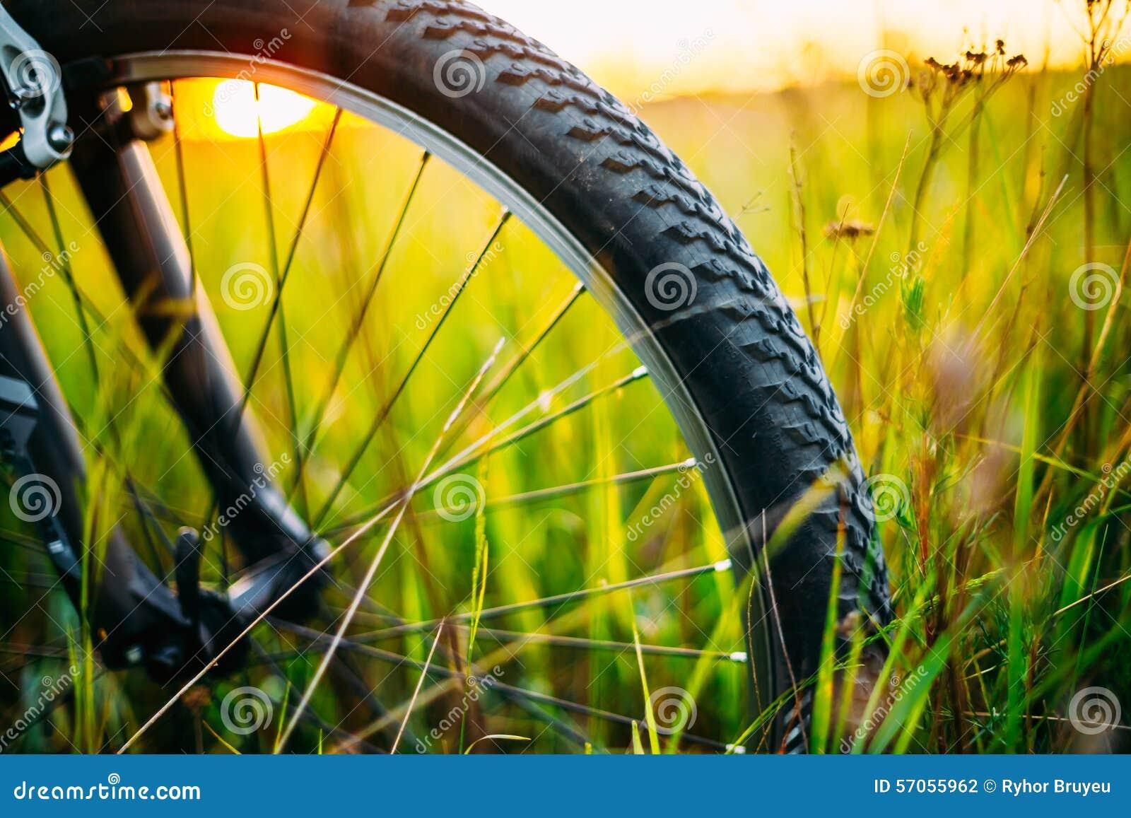 Fietswiel in de Weide van het de Zomer Groene Gras
