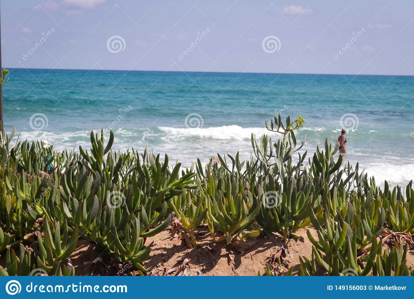 Figdety lata dziki Cretan morze