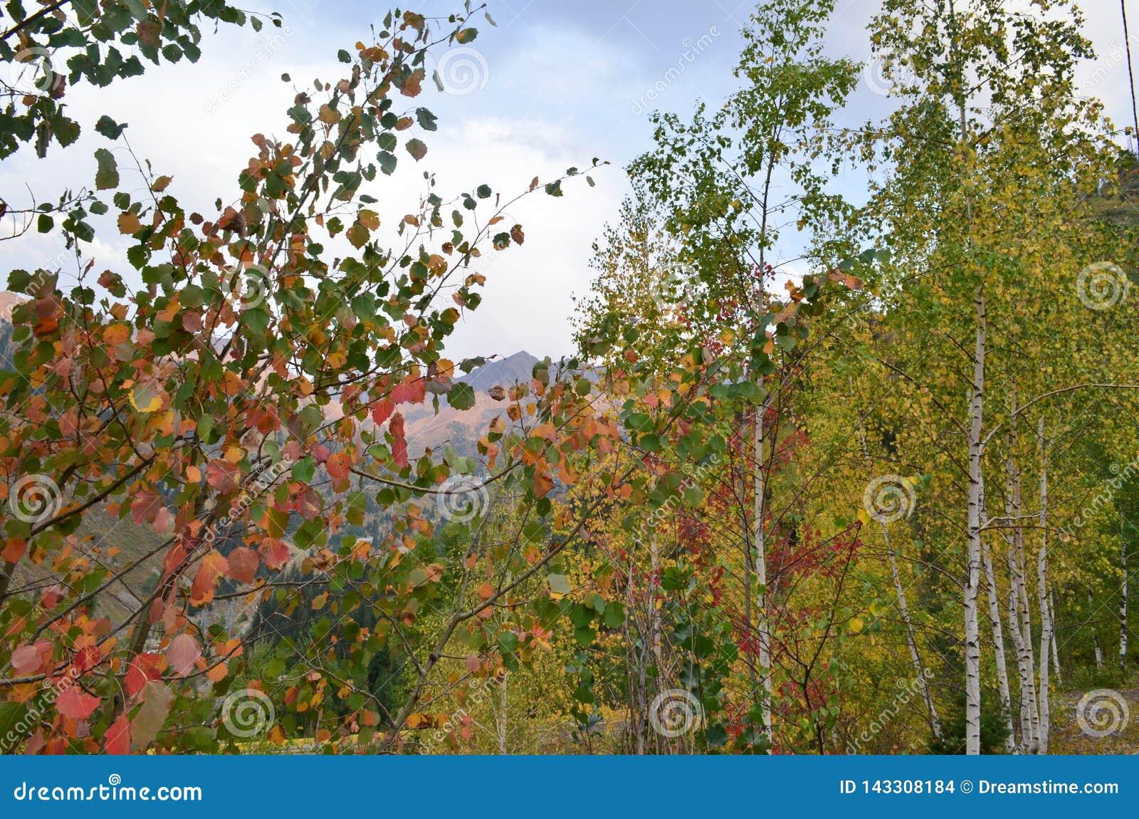 Fighting autumn with summer. Birch Grove.