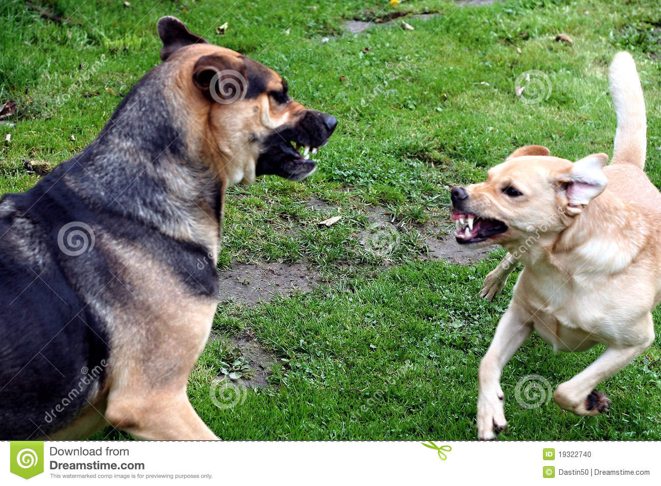 Home Dogs - Imitation Fighting