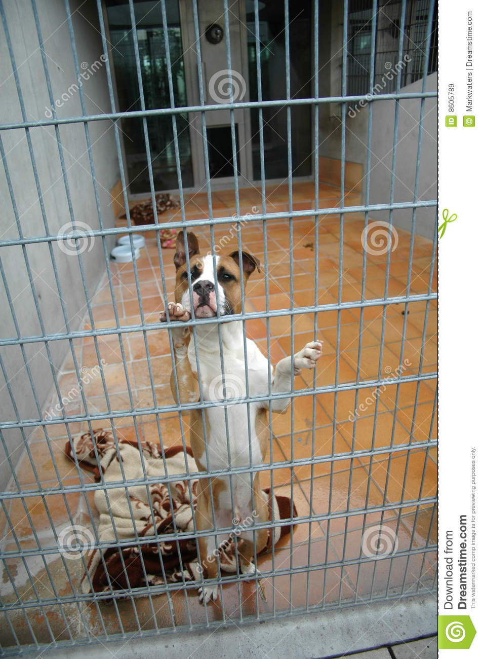 Fighting Dogs In A Cage Royalty Free Stock Images Image