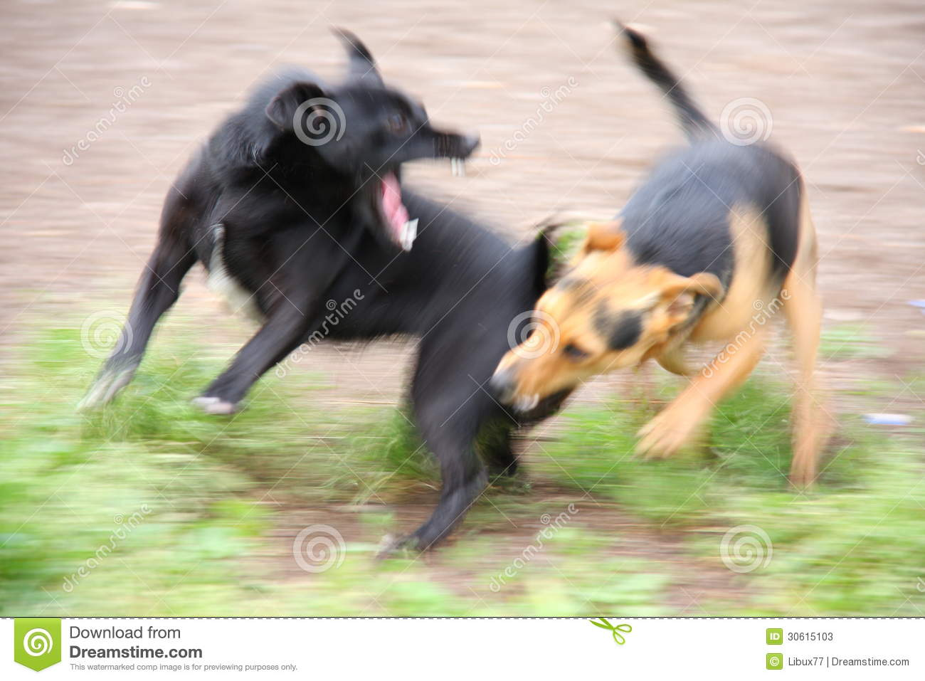 Two Dogs Fighting Over Food