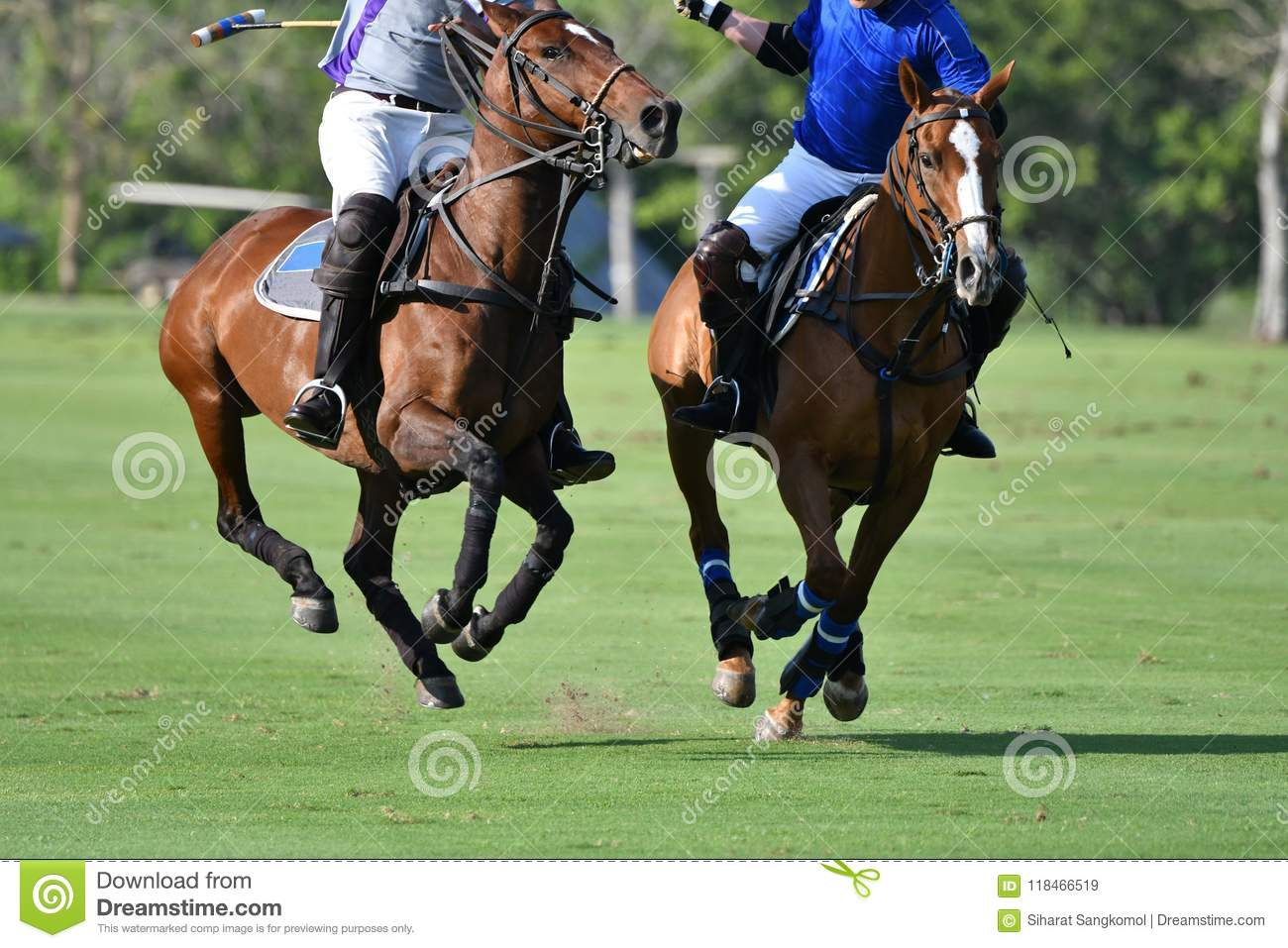 Horse Polo Players In Polo Match Stock Image Image Of Horse Fighting 118466519