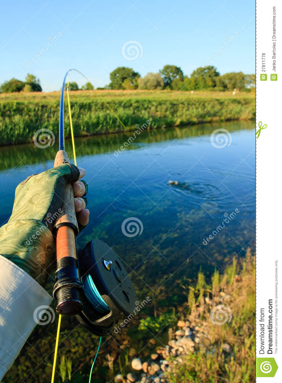 Fighting trout royalty free stock photos image 27811778 for Places to fish near me for free