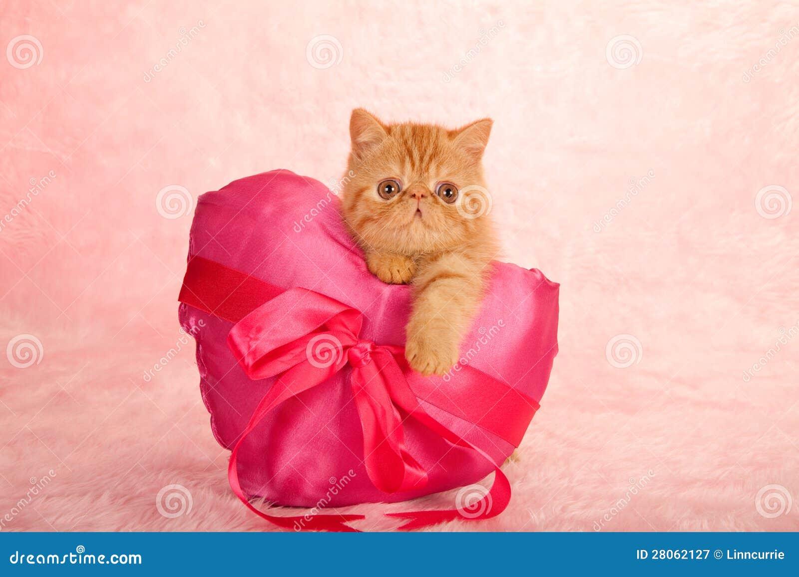Figlarka na miłości serca poduszce