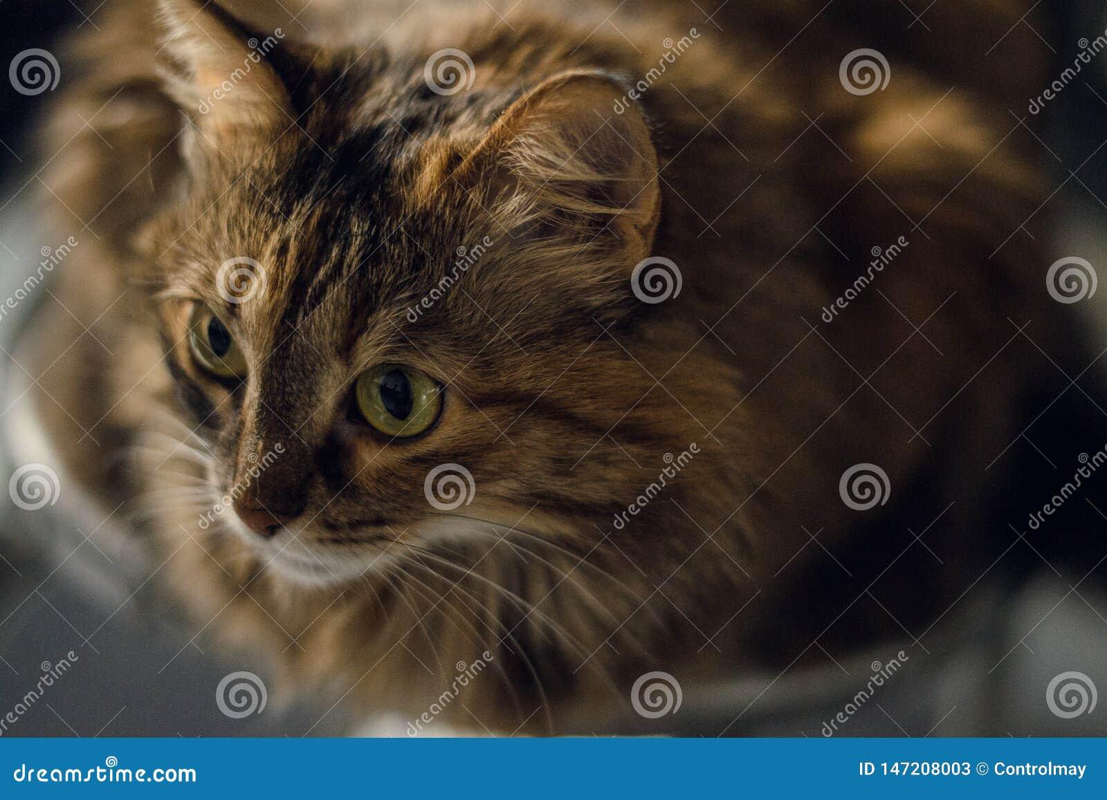 Figlarnie spojrzenie kot