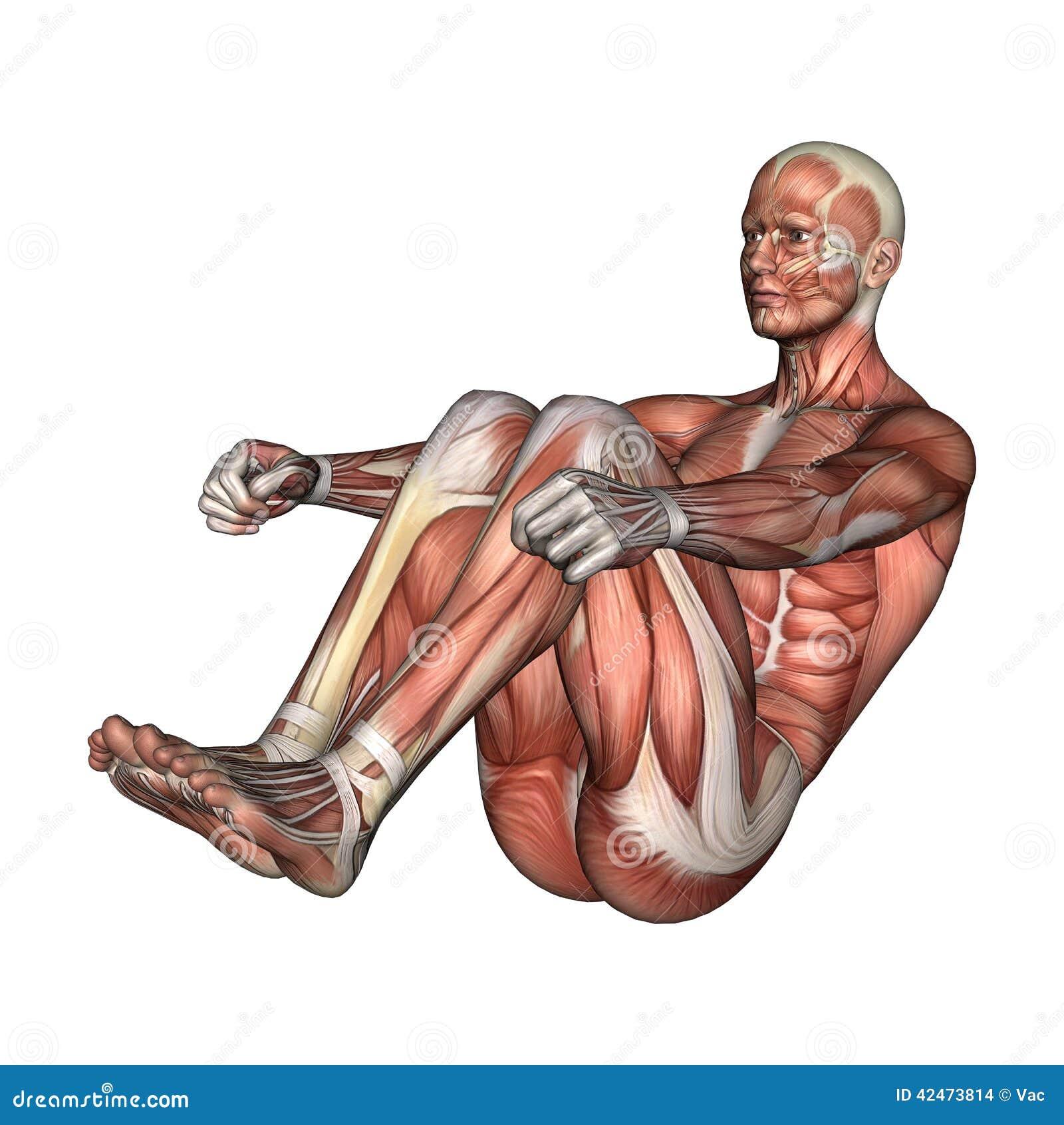 Figura Masculina De La Anatomía Stock de ilustración - Ilustración ...