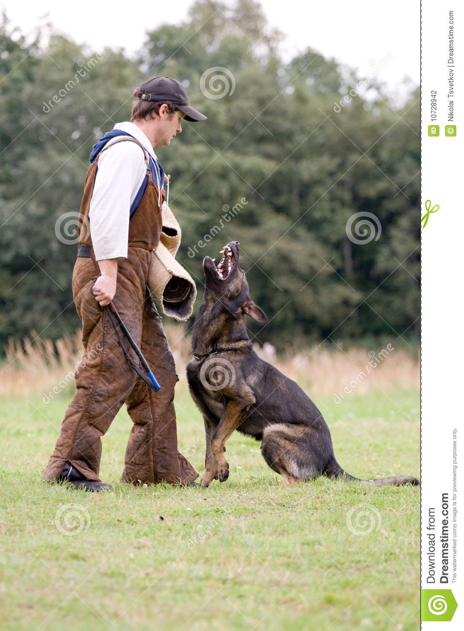 Figurant And German Shepherd At Work Stock Photography ...