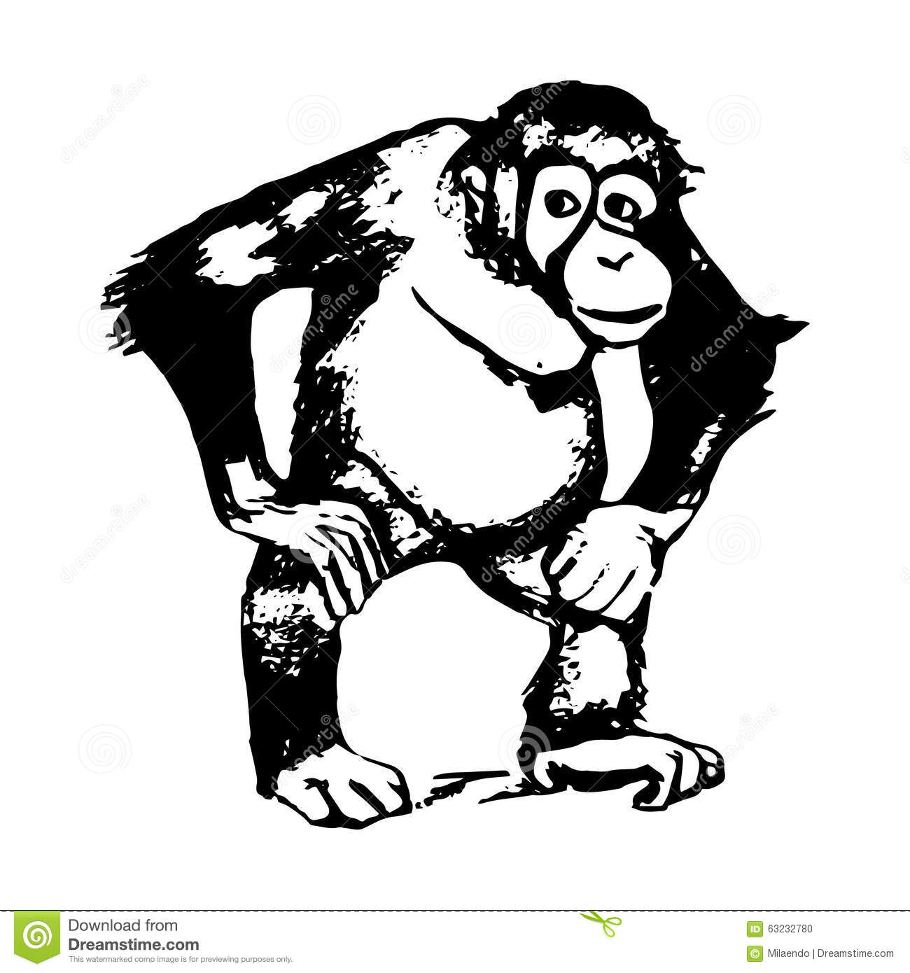 Line Drawing Monkey Face : The figure of monkey an orangutan graphics stock