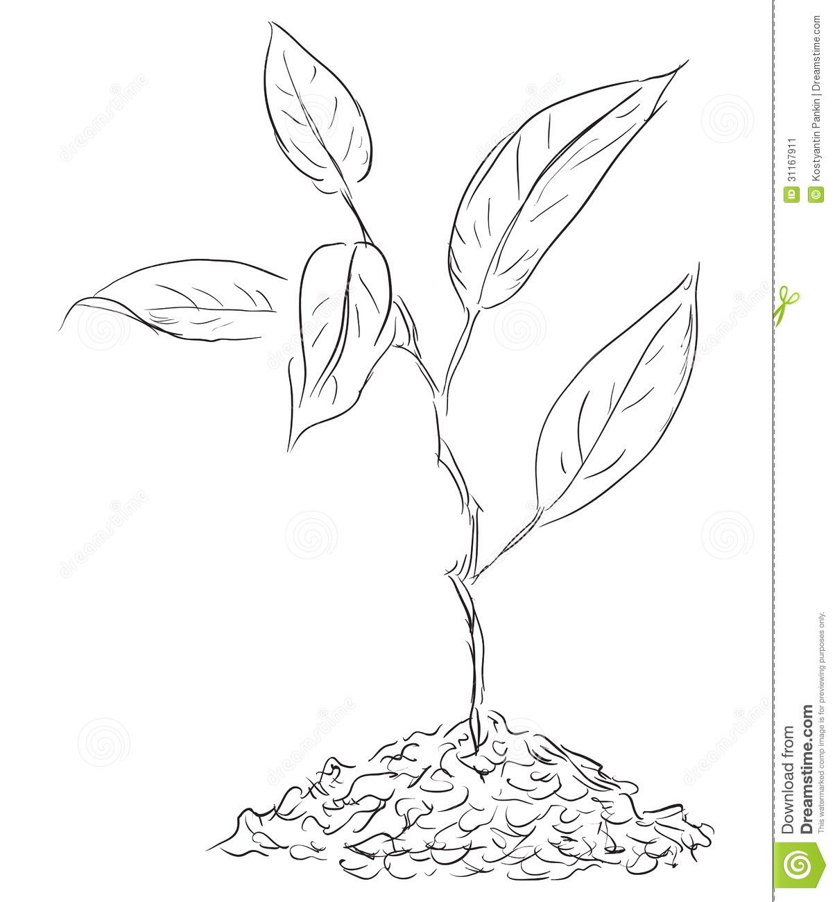 Figure Twigs Sprout Stock Image Image 31167911