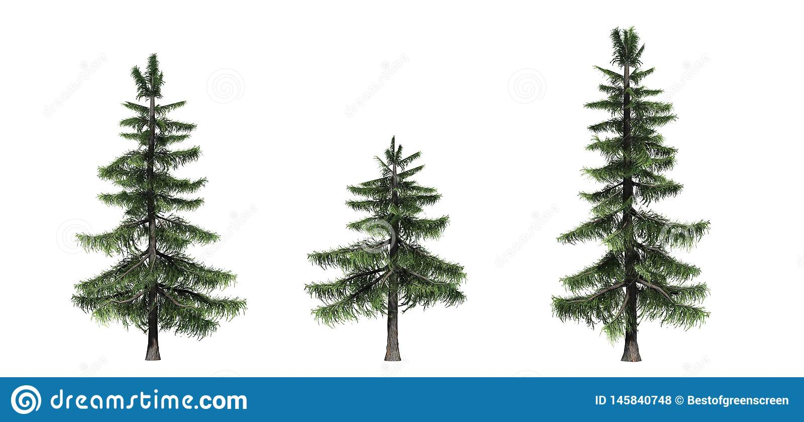 Fije de árboles de cedro de Alaska