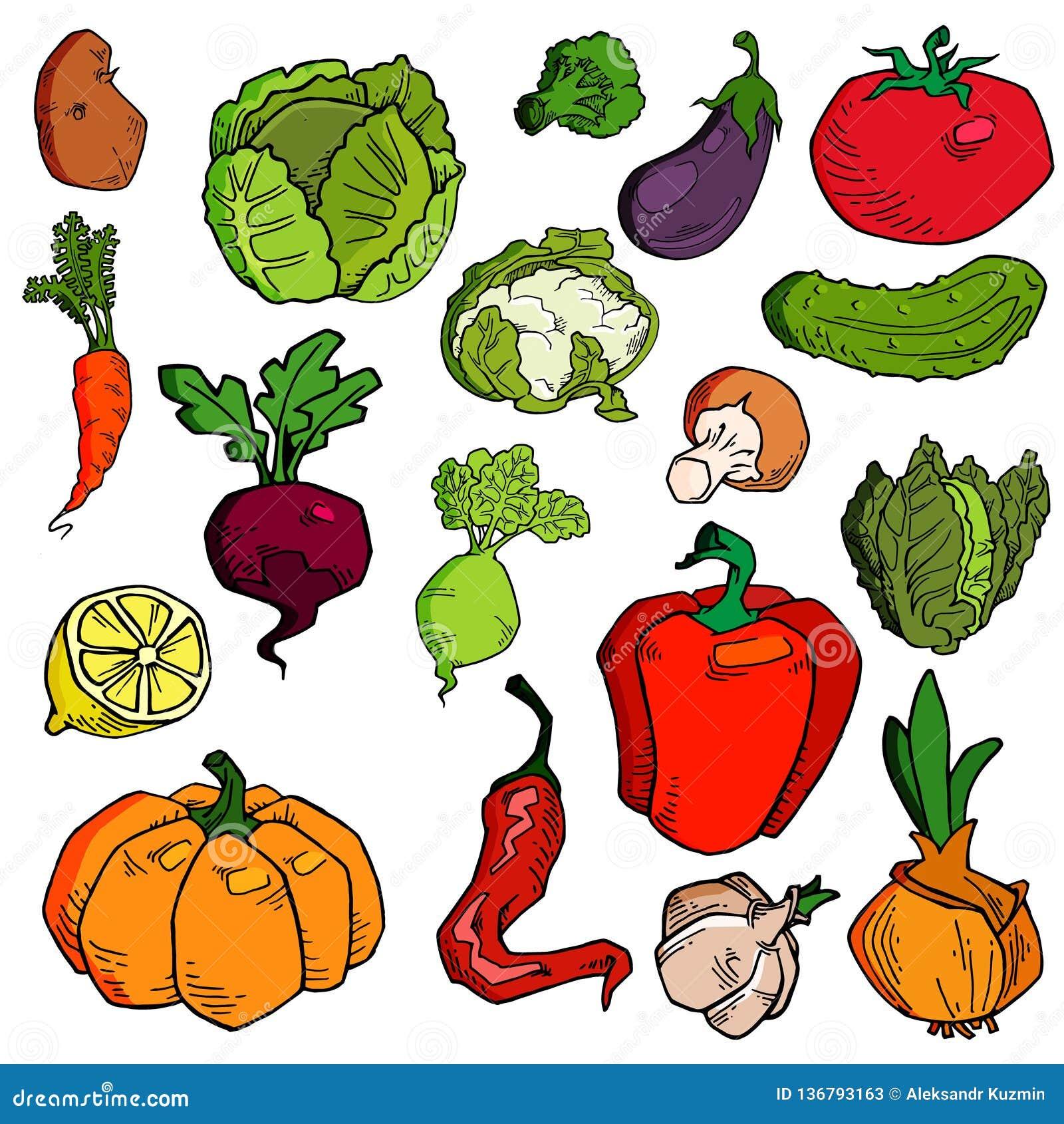 Fije de verduras exhaustas de la diversa mano Bosquejos de diversa comida Aislado en blanco