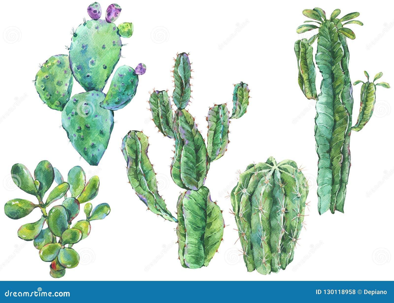 Fije del cactus de la acuarela, suculento, flores ejemplo natural
