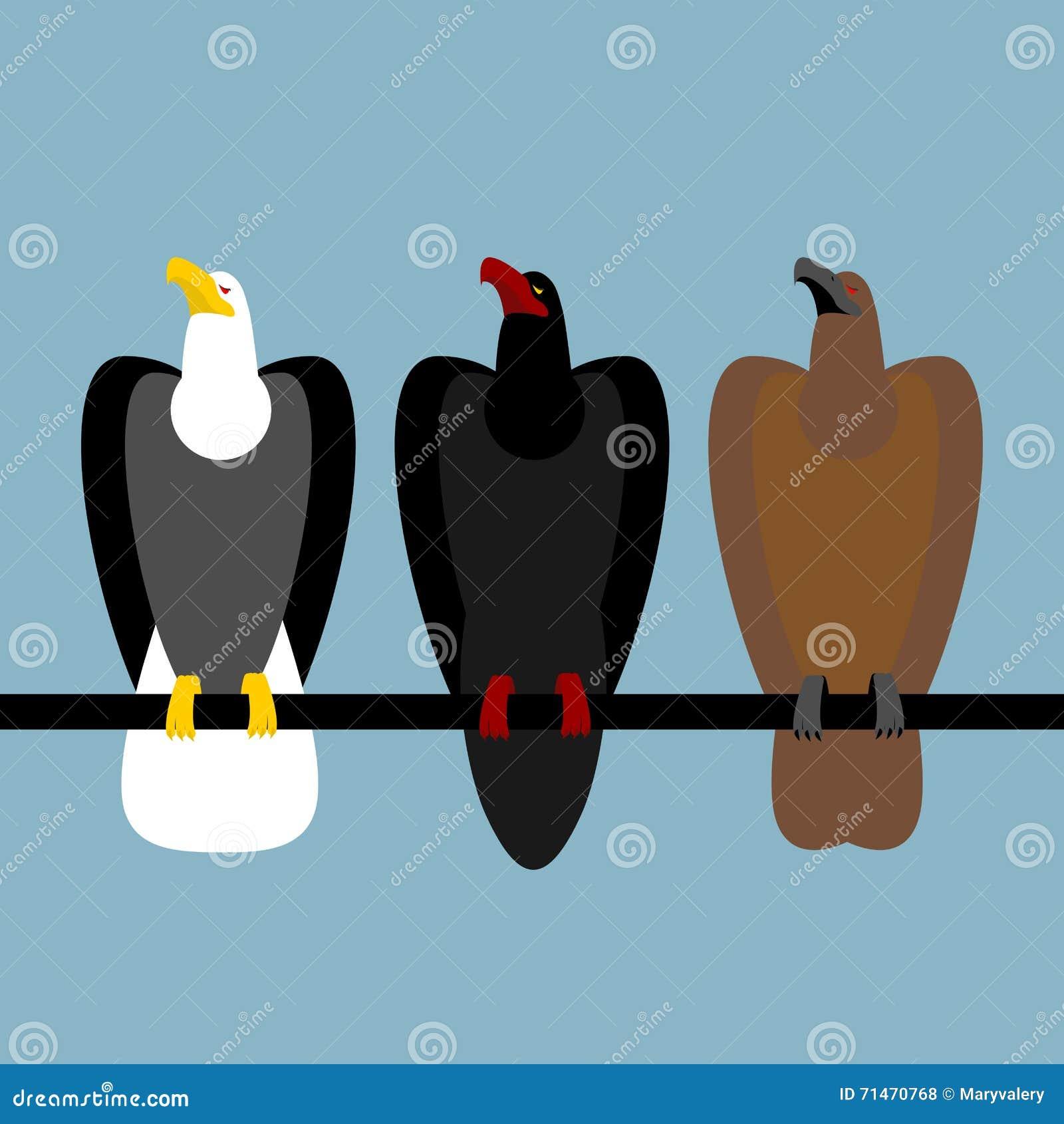 Fije Las Aves Rapaces De Las águilas Águila Calva Rápida Con La ...