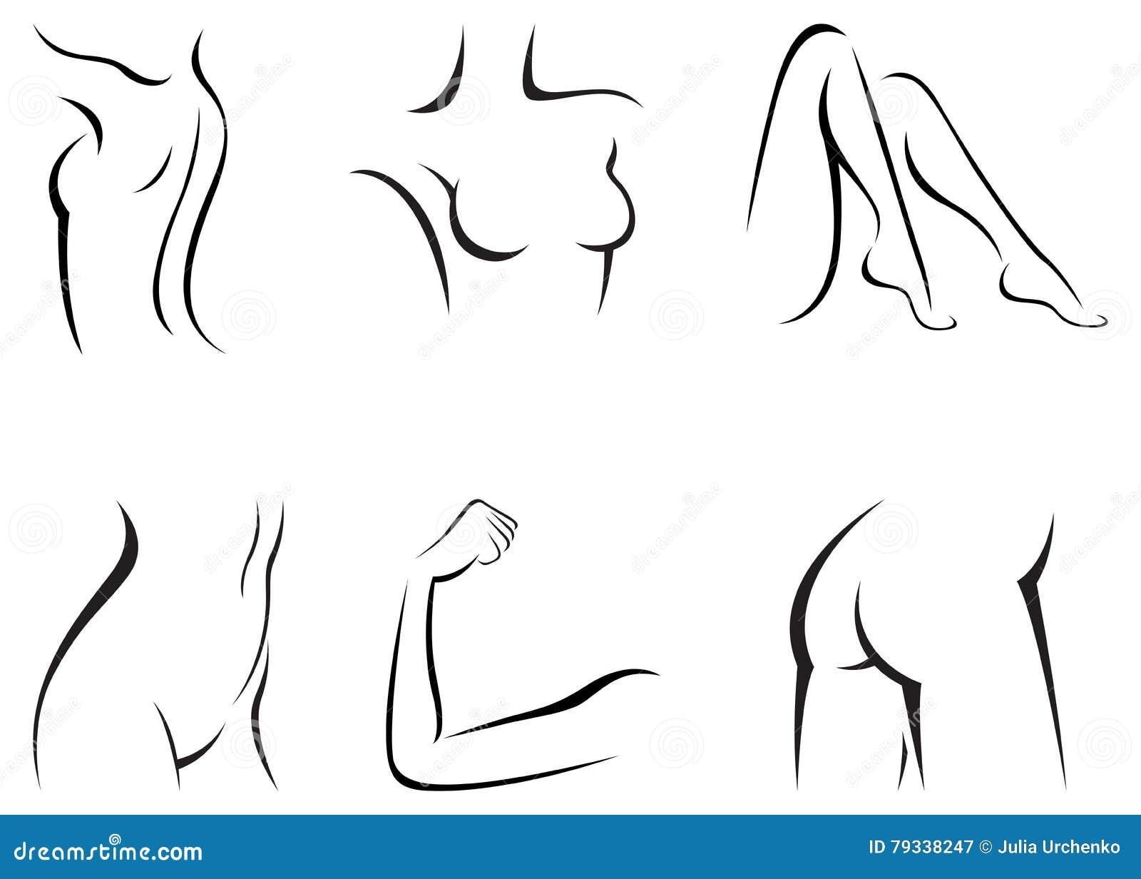Fije A Las Partes Del Cuerpo Femeninas Estilizadas Ilustración del ...