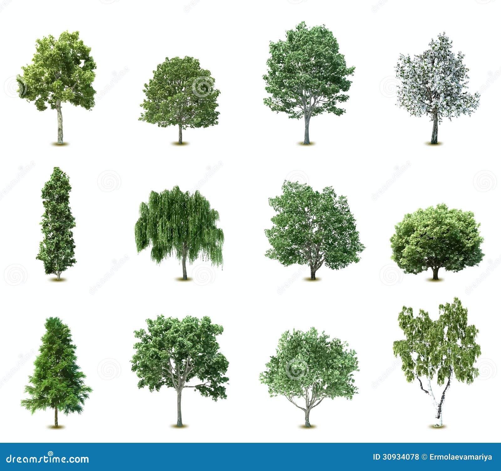 Fije Los árboles. Vector Fotos de archivo libres de ...