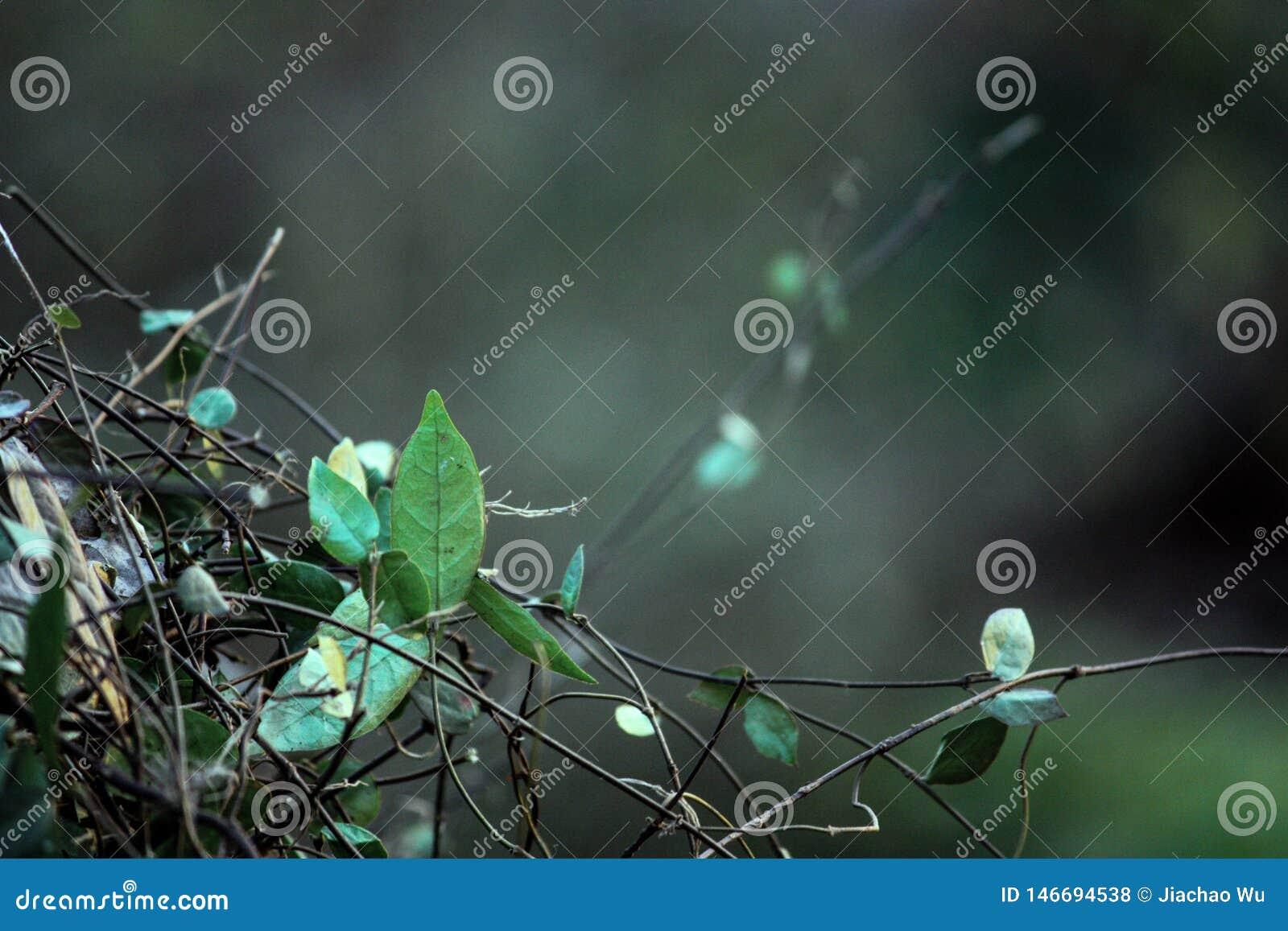 Fikus; i morgonen; groda; nya sidor; gröna sidor
