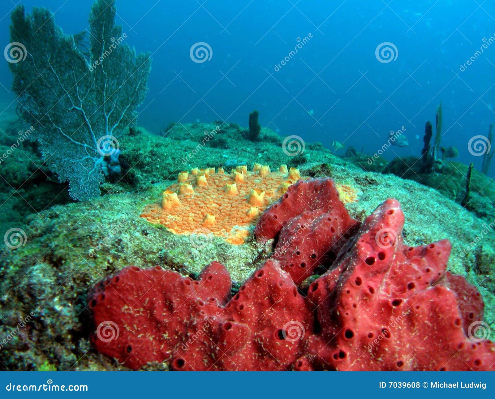 Filón coralino