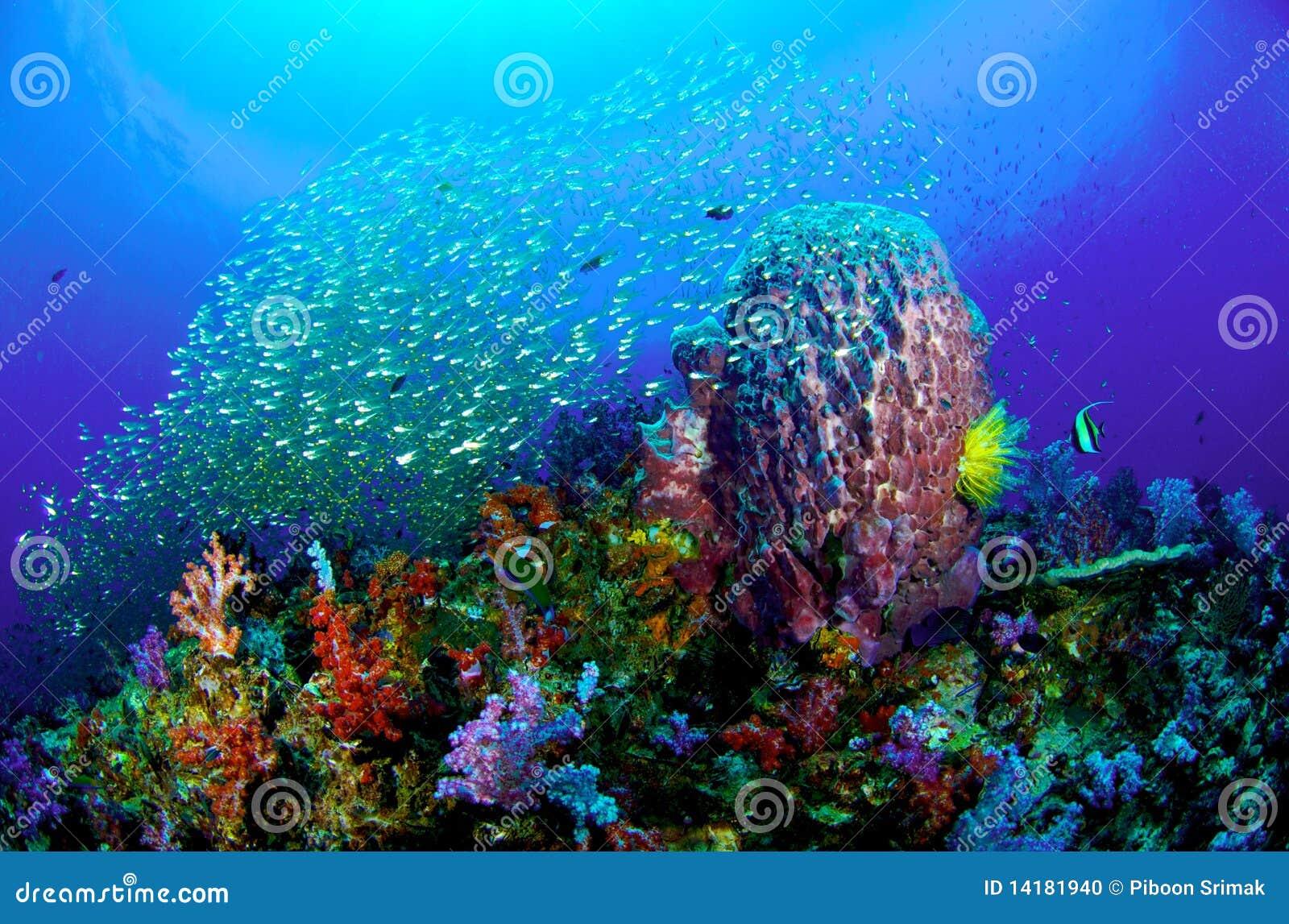 Filón coralino colorido