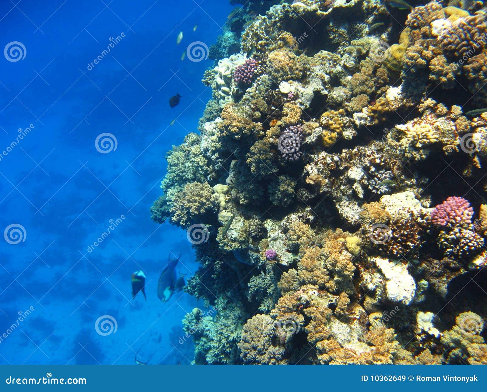 Filón coralino en el Mar Rojo, Marsa Alam