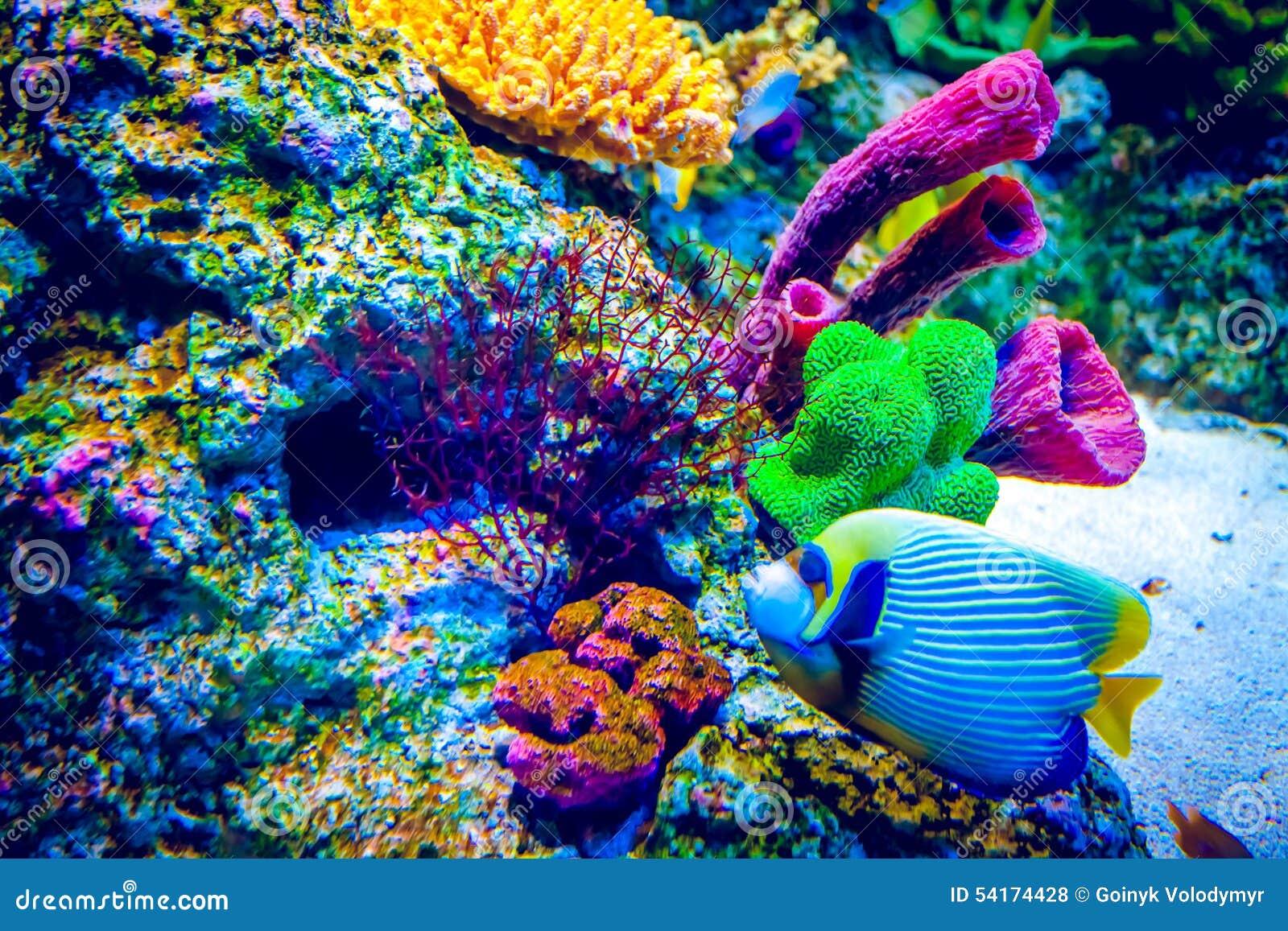 Filón coralino y pescados tropicales