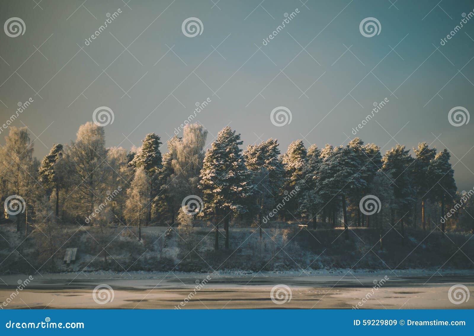 Download Fila de árboles imagen de archivo. Imagen de bosque, blanco - 59229809