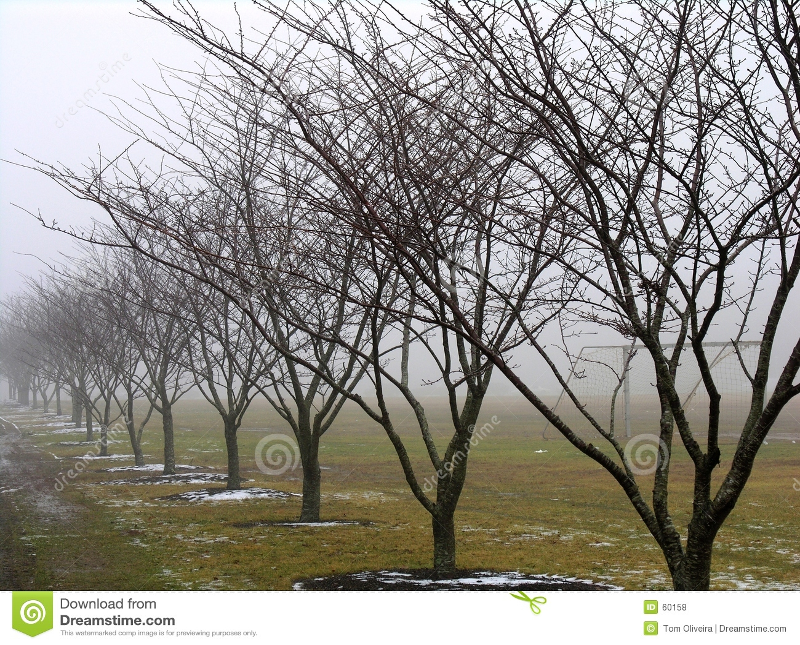 Fila de árboles