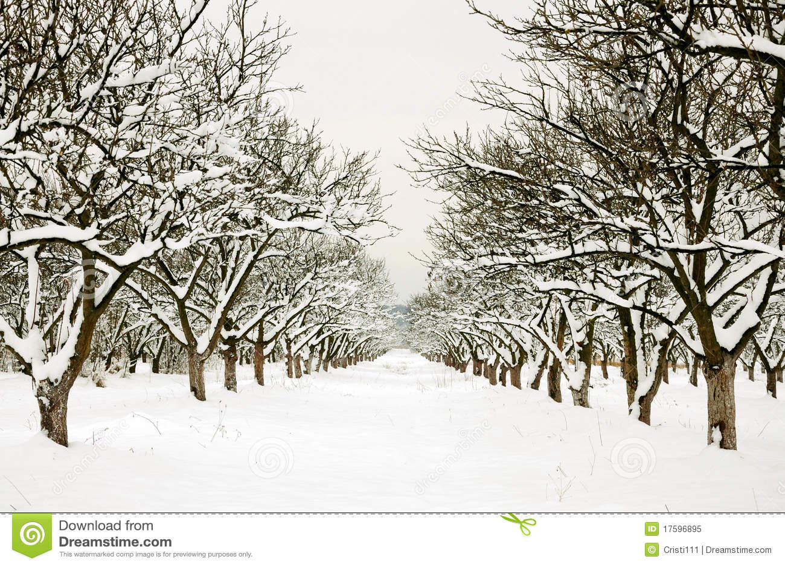 Fila a través de la huerta del invierno