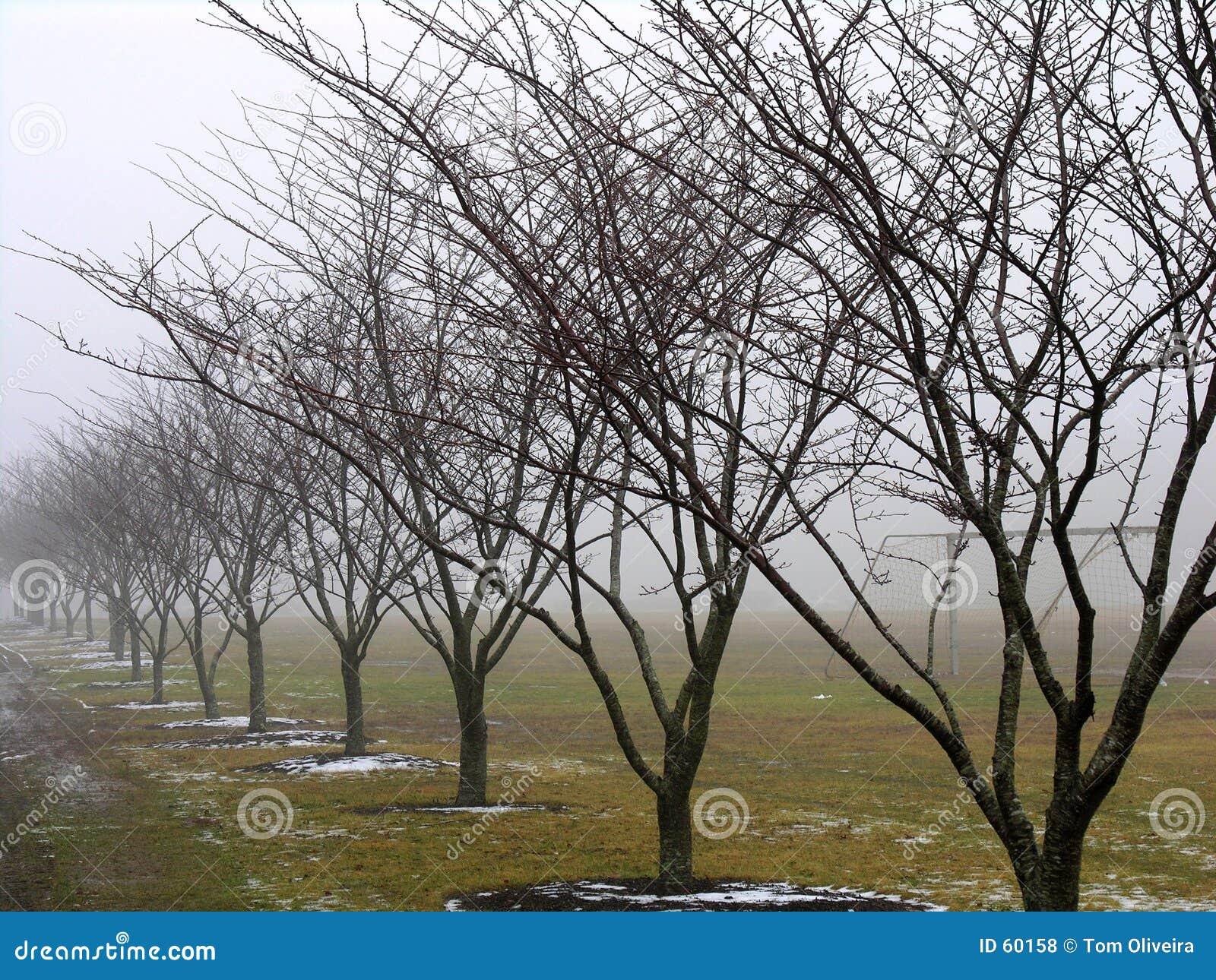 Fileira das árvores