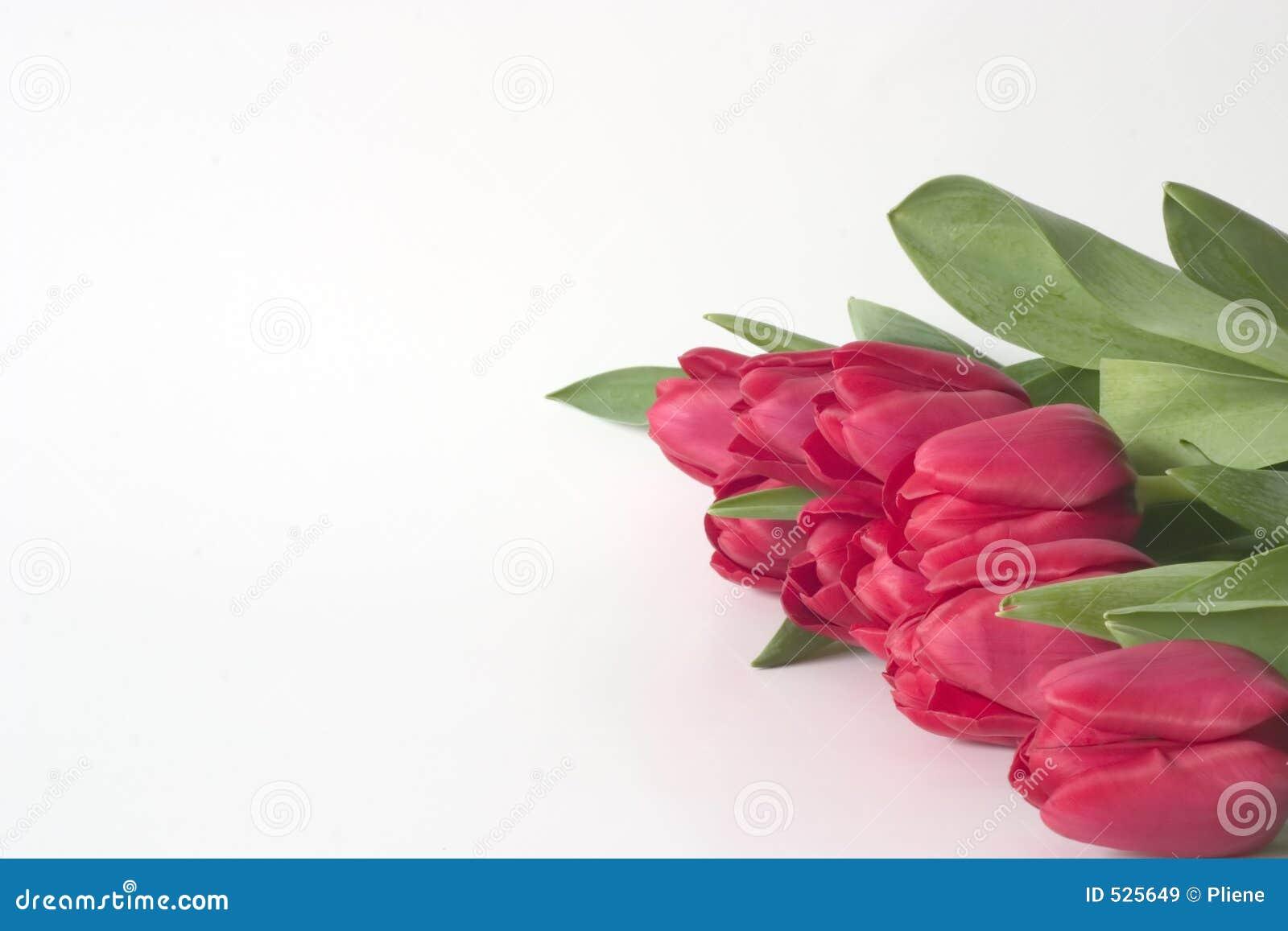 Fileira dos Tulips 3